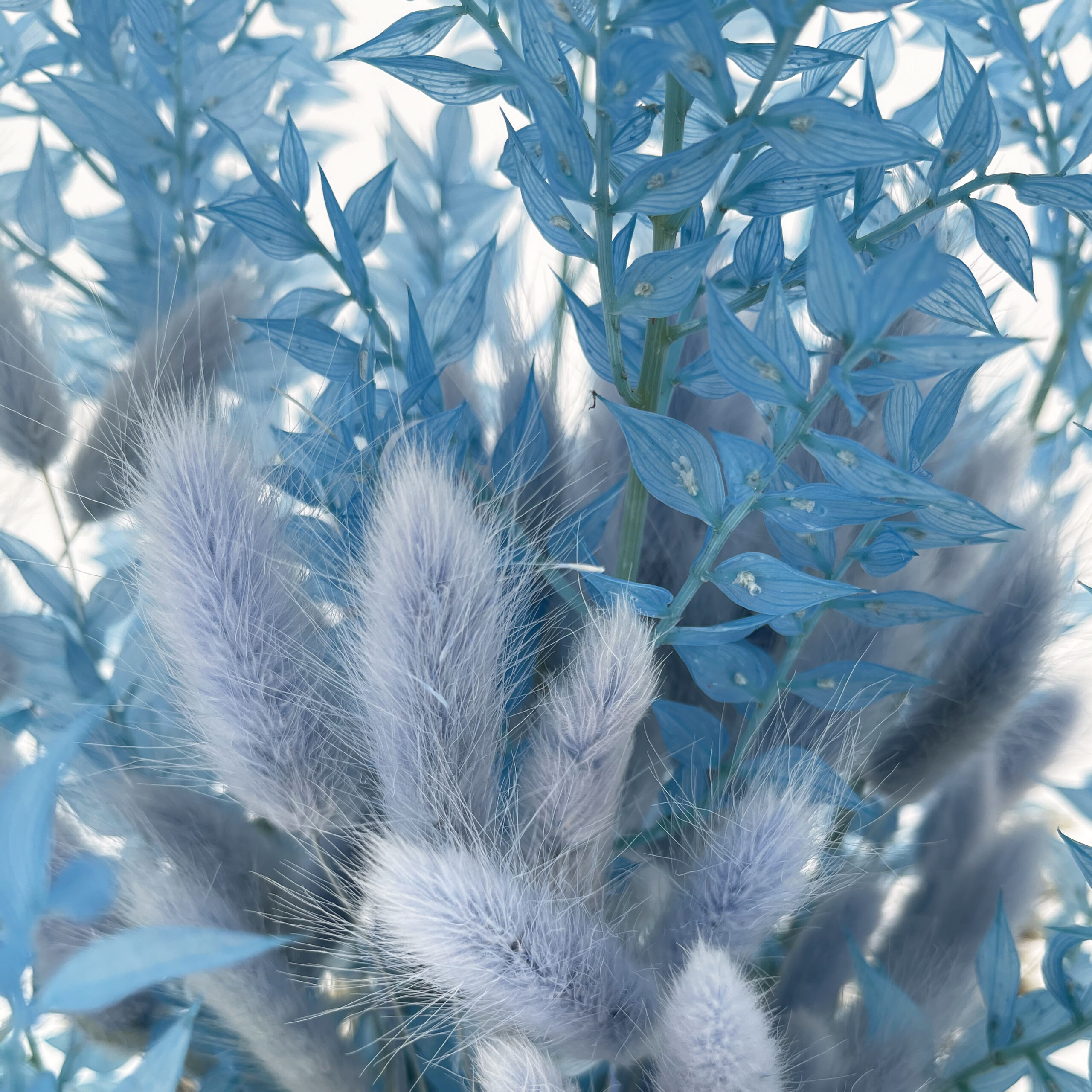 Bouquet di Laugurus Blu Glizia e Ruscus Celeste