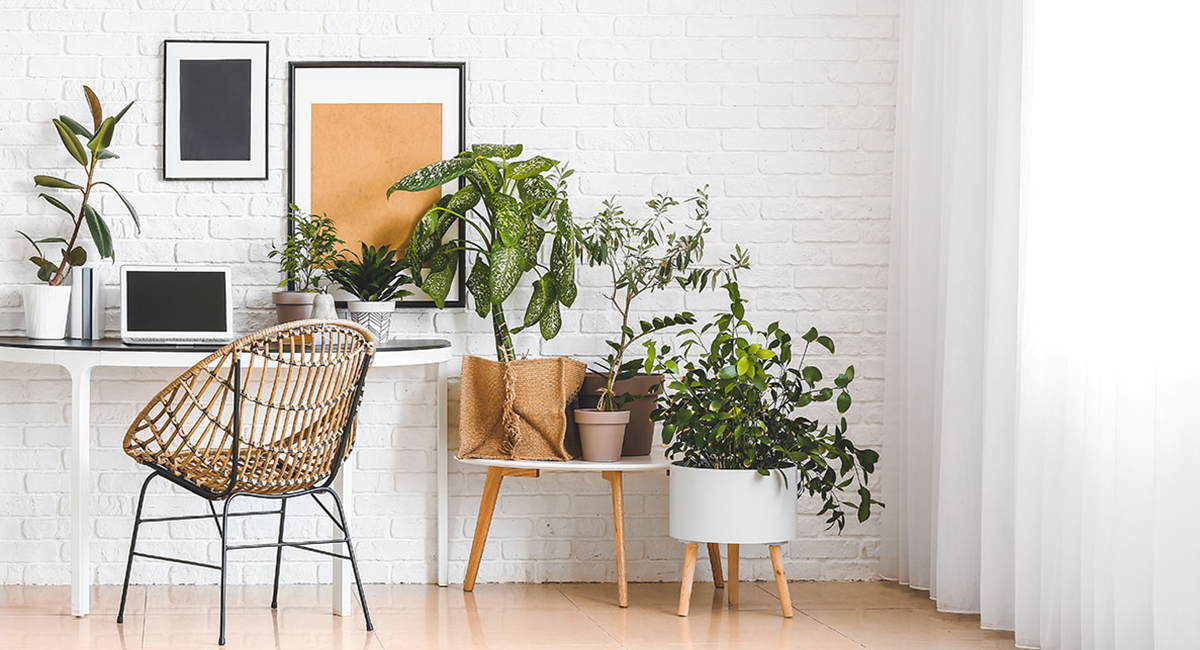 piante con poche cure