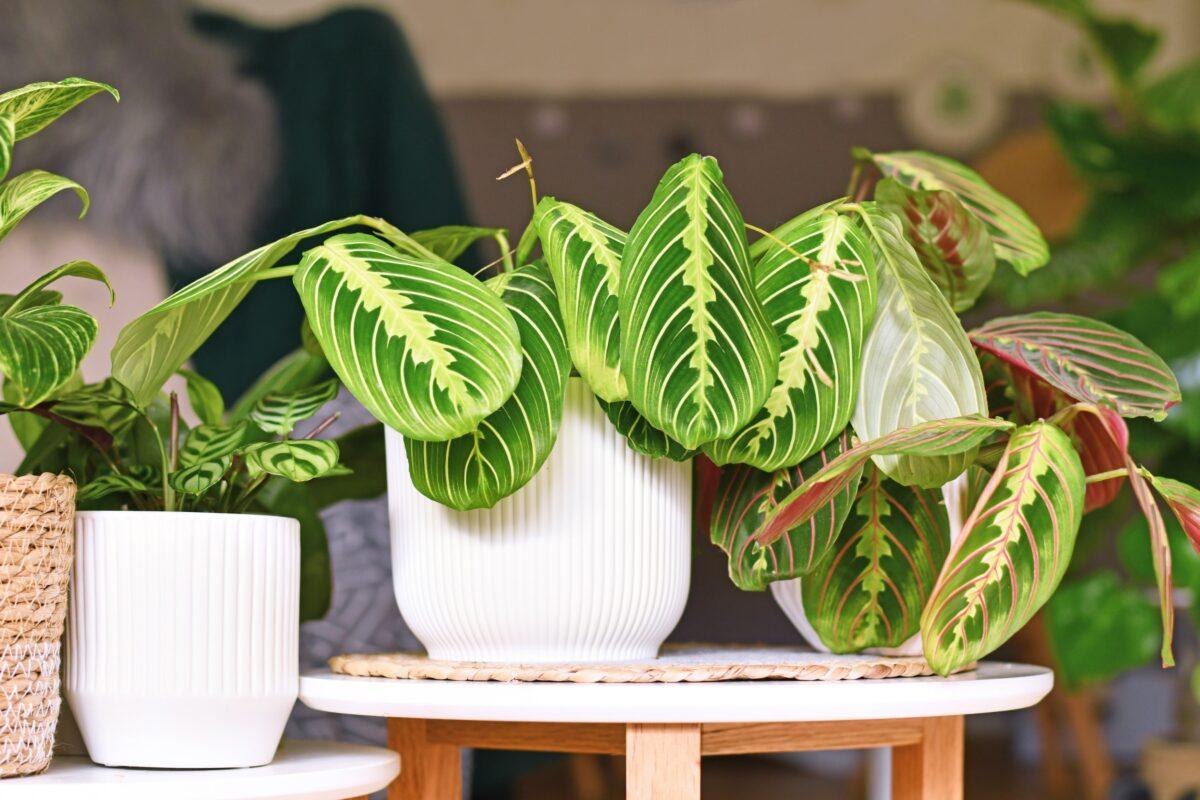 piante rare