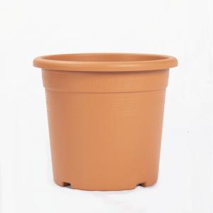 vaso-coltura-standard